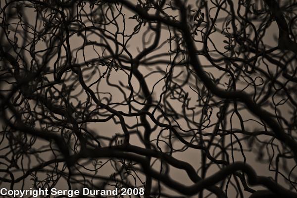 branches arbre structure géomètrique