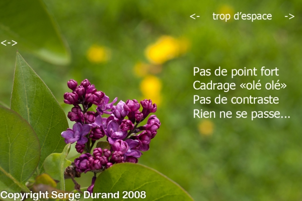 photo lila originale avec commentaires