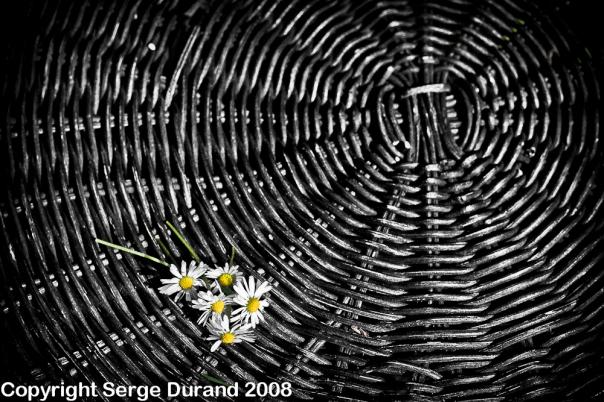 zone system gris neutre table fleur rotin